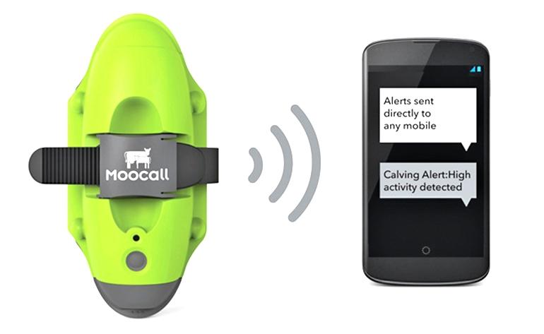 Moocall работает в любой точке мира с помощью GSM-сигнала