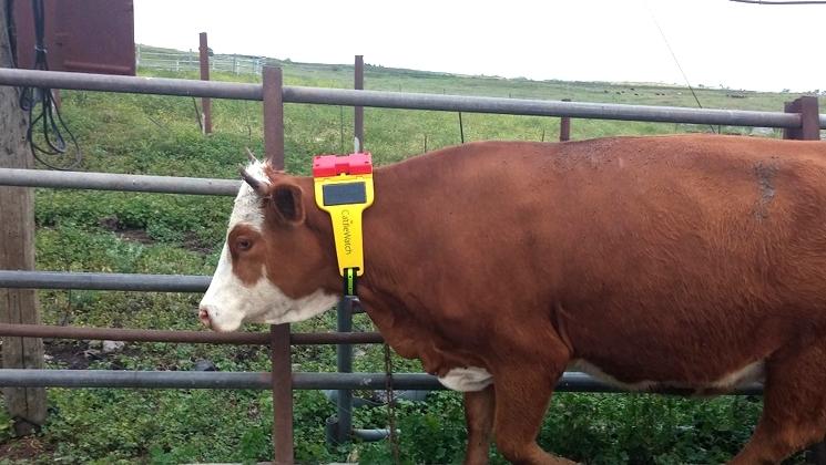 Система CattleWatch даже передает предупреждения, если обнаружены хищные животные или браконьеры