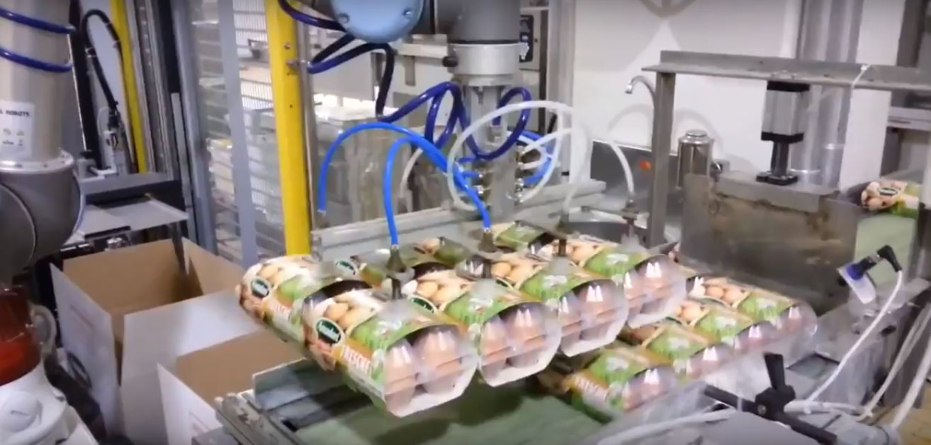 В чем разница между коллаборативными роботами (коботами) и промышленными роботами?