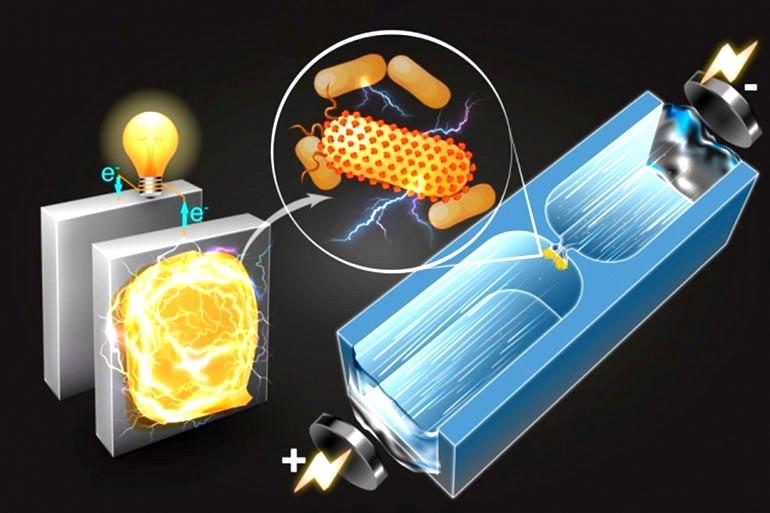Этот упрощенный рисунок показывает, как микрофлюидная техника быстро сортирует бактерии, чтобы определить их потенциальную способность генерировать электричество