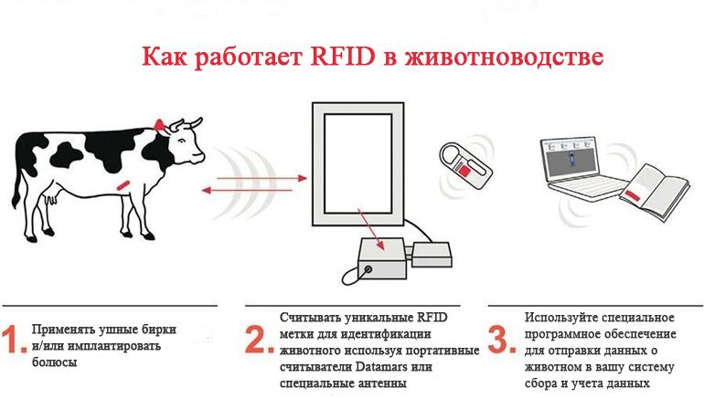 Радиочастотная идентификация с использованием электромагнитных полей для автоматической идентификации и отслеживания меток, прикрепленных к объектам (животным)