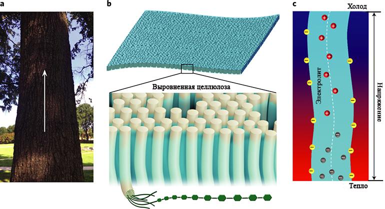 Схема ионного проводника состоящего из выровненных целлюлозных нановолокон