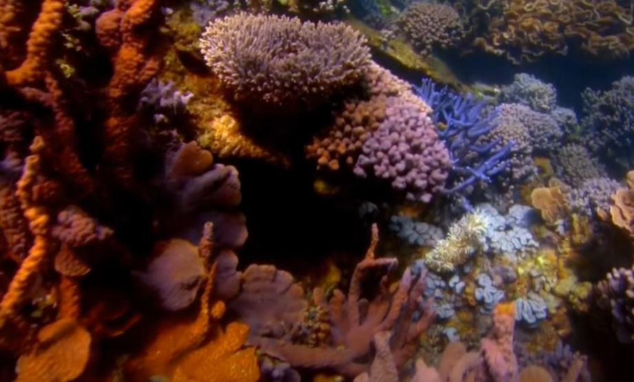 Искусственное выращивание кораловых рифов теперь возможно благодаря альтернативной энергетике