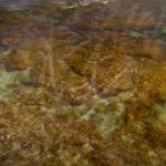 Создание коралловых рифов с помощью солнечной энергии